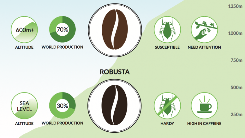 Caffeine-Amount-in-Arabica-and-Robusta