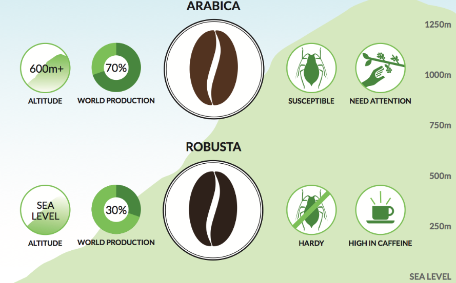 Differences: Arabica and Robusta Coffee